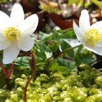 Теннисные растения: виды и особенности ухода
