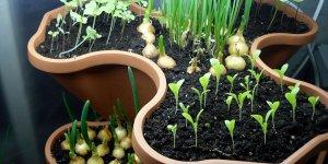 Оборудуем домашний огород