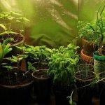 Домашний огород: особенности подбора культур