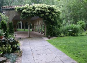 Гортензия черешковая в саду