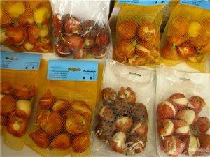 Луковицы разных видов цветов