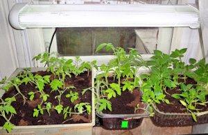 Оборудование освещения домашнего огорода
