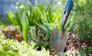 Весенняя пересадка многолетних садовых цветов