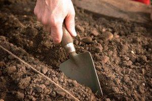 Готовым почву для зеленых культур