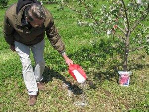 Весенняя подкормка яблони минеральными удобрениями