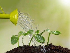 Особенности полива растений на домашнем огороде