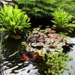 Оформление водоемов и растения для дорожек