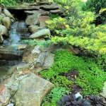 Рокарии, альпинарии, гравийные цветники: особенности выращивания и ухода