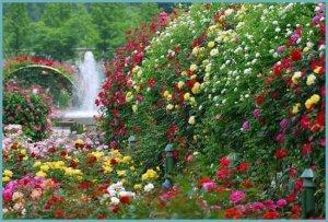 Роза в ландшафтном дизайне