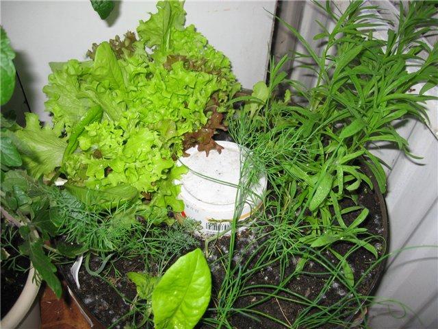 Рыхление почвы огорода на подоконнике