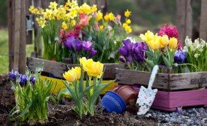 Луковичные цветы: особенности выращивания и ухода