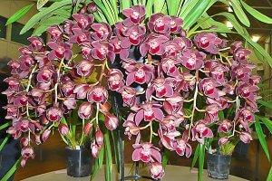 Уход за орхидеей цимбидиум в домашних условиях