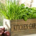 Огород на подоконнике: особенности ухода за растениями
