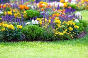 Устройство цветника в саду