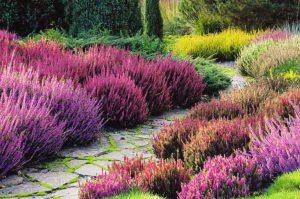 Вересковый сад