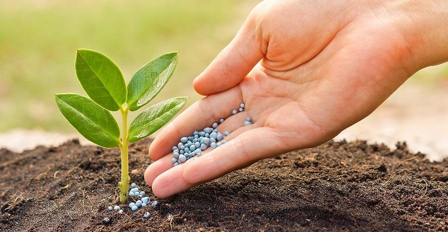 Удобрения: виды и особенности использования