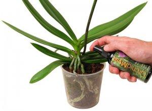 Внекорневая подкормка орхидеи