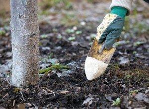 Защищаем корни деревьев в преддверии холодов