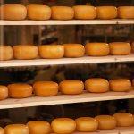 Уральские ученые будут создавать необходимые компоненты для производства элитных сортов сыра