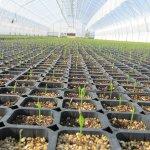 Первый в СКФО селекционно-семеноводческий центр откроется в Карачаево-Черкесской республике