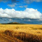 Российская пшеница скоро отправится в Венесуэлу