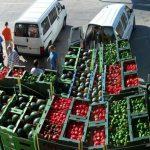 Экспорт растениеводства растет