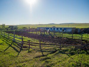 Ферма для разведения верблюдов