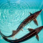 В Республике Коми будет строиться рыбоводческий комплекс