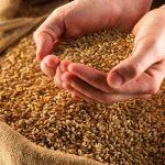 Омская область по сбору зерна вошла в топ -5 по Сибирскому федеральному округу