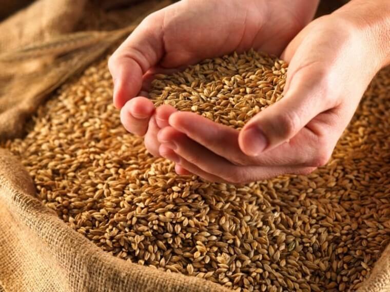 Омские производители зерна и бобовых культур входят в топ -5 по Сибири