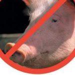 РФ останется без молдавской свинины