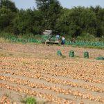 В Приморском крае подходит к финалу уборочная страда на картофельных полях