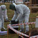 В Ленинградской области провели учения по борьбе с АЧС