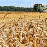 Россия побьет рекорды по сбору урожая