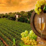 В России хотят запустить «винный туризм»