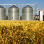 Обзор отечественного рынка зерновых