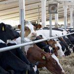 Животноводство Рязанской области развивается благодаря инвестиционным проектам