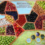 В Ленинградской области развивается агропромышленный комплекс