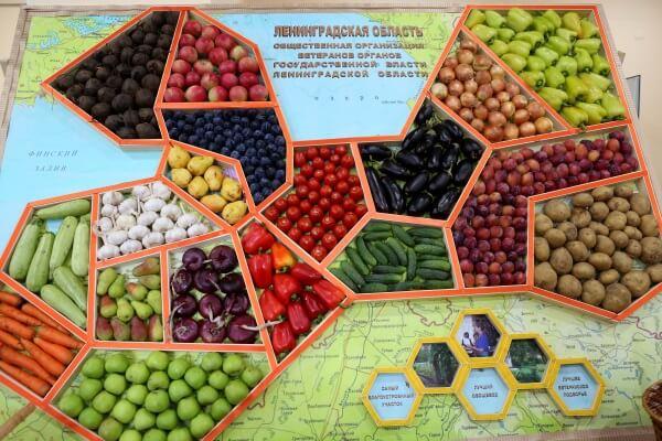 В Ленинградской области наблюдается устойчивое развитие сельского хозяйства