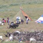 В Ненецком округе закончено вакцинирование оленей против сибирской язвы работа