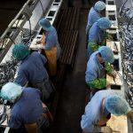 Рыбокомбинат « Островной» восстанавливает свою деятельность