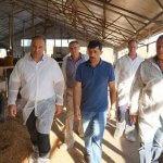 В Ставропольском крае власти намерены поддерживать молочное животноводство и дальше