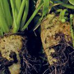 Российским аграриям  отечественные семена