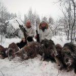 Отстреливать диких кабанов Путин не собирается
