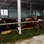 Завтра будет введена в эксплуатацию новая молочнотоварная ферма вблизи  Наро-Фоминска