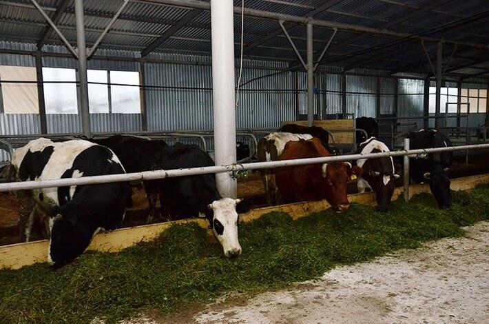 25 ноября откроется новая ферма в Норо-Фоминском районе