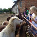 Учащиеся Санкт-Петербурга и Ленинградской области  посещают коневодческую ферму