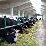 Тамбовская область: Производство молока выросло за год на 4%