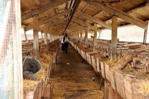 Выращивание нутрий на ферме