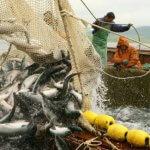 В Омской области развивают рыбоводческую отрасль АПК
